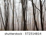 english woodland on a foggy... | Shutterstock . vector #572514814