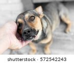 man caresses a dog hand | Shutterstock . vector #572542243