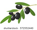vector black olives branch with ... | Shutterstock .eps vector #572552440