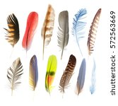 Collection Pen Feathers Of...