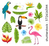 illustration set tropical... | Shutterstock .eps vector #572616544