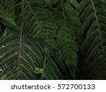 fern | Shutterstock . vector #572700133