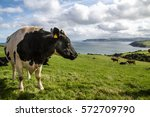 Cow With A View
