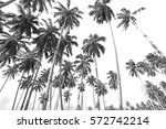 coconut trees at tropical beach ... | Shutterstock . vector #572742214