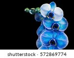 Blue Flower Orchid On A Black...