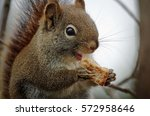 Squirrel Happily Eating Toast...