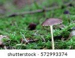 mushroom with long stalk | Shutterstock . vector #572993374