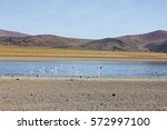 a group of flamingos in the... | Shutterstock . vector #572997100