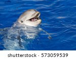 Portrait Of A Bottlenose Dolphin