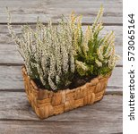 White Heather In A Basket On A...