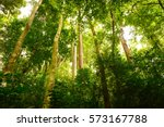 jungle forest with tropical... | Shutterstock . vector #573167788
