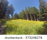 Sunny Daffodil Filled Meadow I...
