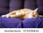 Relaxing Ginger Cat Lay Down O...
