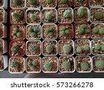 cactus tree | Shutterstock . vector #573266278
