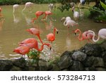A Flock Of Flamingos Looking...