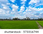 cornfield blue sky with white... | Shutterstock . vector #573316744