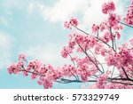 beautiful cherry blossom sakura ... | Shutterstock . vector #573329749