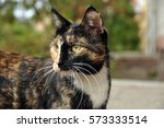 cat named trinity | Shutterstock . vector #573333514