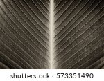 Abstract Striped Texture From...