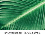 abstract green striped texture... | Shutterstock . vector #573351958