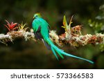 exotic bird with long tail.... | Shutterstock . vector #573366583
