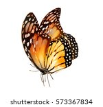 watercolor butterfly  isolated... | Shutterstock . vector #573367834