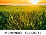 Landscape Of Green Wheat Field...
