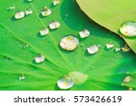 Drops Of Water On A Lotus Leaf...