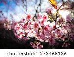 giant tiger flowers | Shutterstock . vector #573468136
