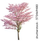 Pink Flowers Tree Isolated On...