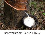 natural latex dripping from a...   Shutterstock . vector #573544639