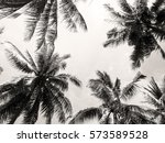 palm tree crowns with fluffy... | Shutterstock . vector #573589528