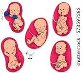 intrauterine life. the fetus in ... | Shutterstock .eps vector #573597283