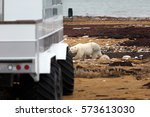 Polar Bear At The Tundra Buggy