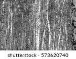 birch forest background  black... | Shutterstock . vector #573620740