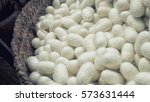 Silkworm Nets For Background  ...