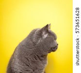 Side Profile Of A Grey Cat Wit...