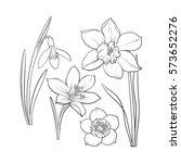set of summer flowers  daffodil ...   Shutterstock .eps vector #573652276