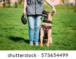 Malinois Dog Sit Outdoors In...