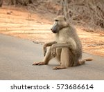 Large Male Baboon Sitting On A...