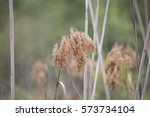 Close Up Of Dried Weeds In...