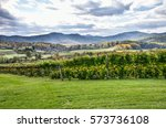 Autumn Vineyard Hills During I...