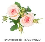 two pink blooming fresh roses... | Shutterstock . vector #573749020