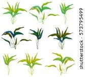 Set Of Aquatic Plant For...