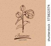 jasmine in sketch style.... | Shutterstock .eps vector #573822574