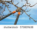 Pruning Fruit Trees With...