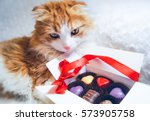 Cute Fluffy Red Cat Box Of...