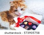 Cute Fluffy Red Cat Box Of...