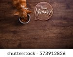 chihuahua dog eat feed. bowl of ... | Shutterstock . vector #573912826