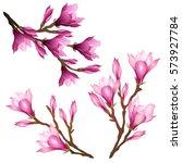 magnolia flowers. set of hand... | Shutterstock .eps vector #573927784